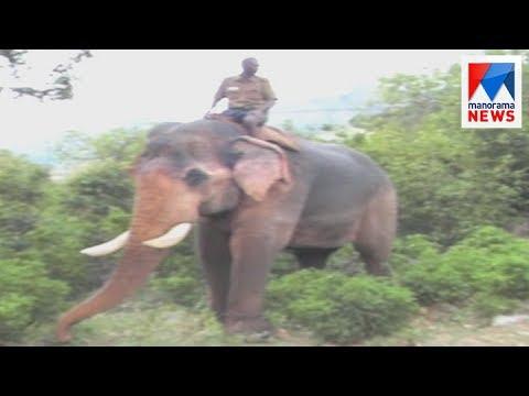 Wild elephant threats in Marayoor; forest department start action   Manorama News