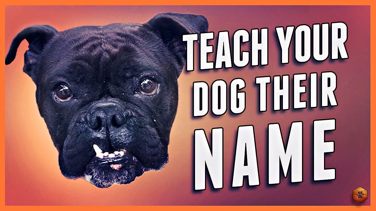 Downloads - Simpawtico Dog Training
