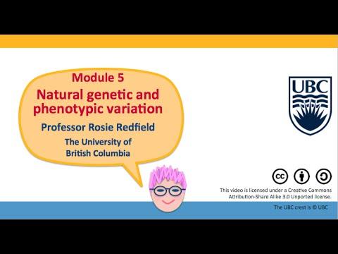 5D - Genome-wide association studies, part 1