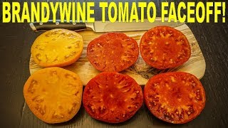 The BEST TASTING Tomato? Brandywine Pink vs Bradywine Yellow vs Brandy Boy