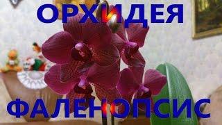 Орхидея фаленопсис. Уход и содержание.(В этом видео рассказано об уходе и содержании комнатной орхидеи фаленопсис., 2016-03-20T13:45:29.000Z)