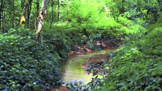 Love Our MacRitchie Forest   WWMN radio podcast 1