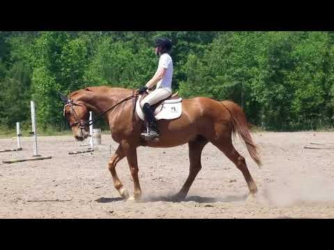 Miranda second ride Kinross 2