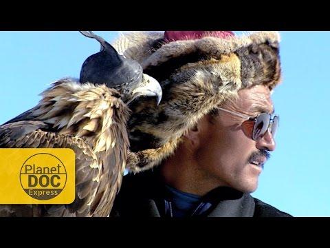 Golden Eagle Hunting. Mongolia | Planet Doc Express