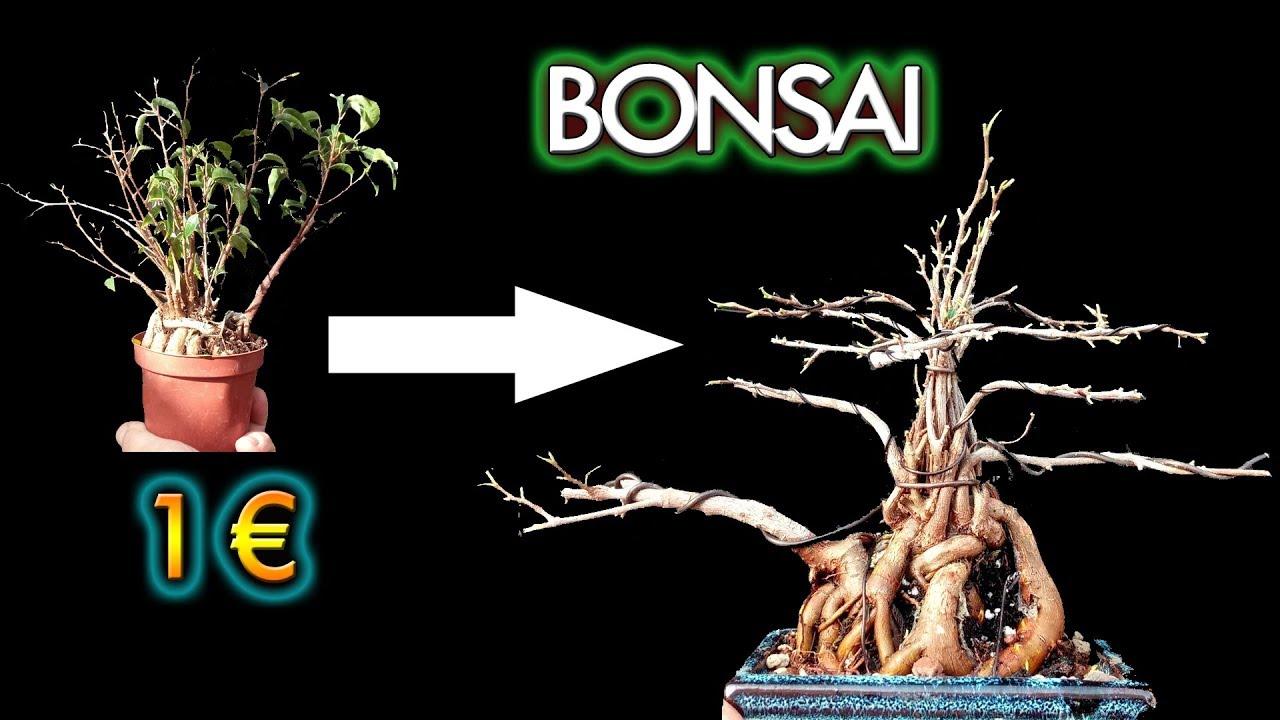 Como Hacer Un Bonsai De Ficus Barato Youtube