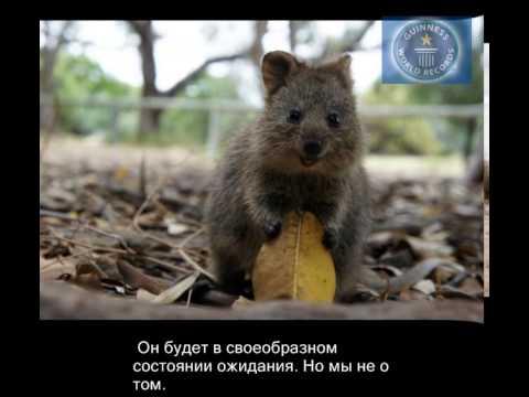 Вопрос: Какое самое счастливое животное на планете?