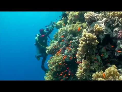 SCUBA Diving Egypt Red Sea - Underwater Video HD
