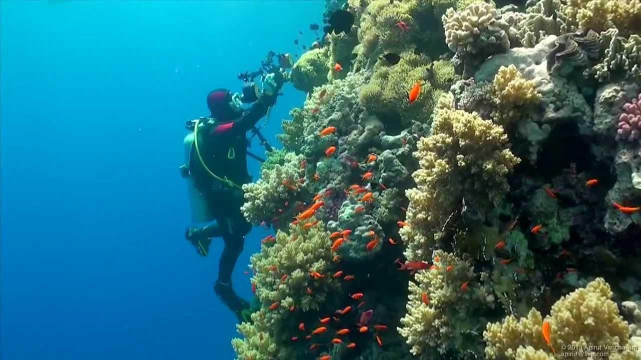 SCUBA Diving Egypt Red Sea - Underwater Video HD