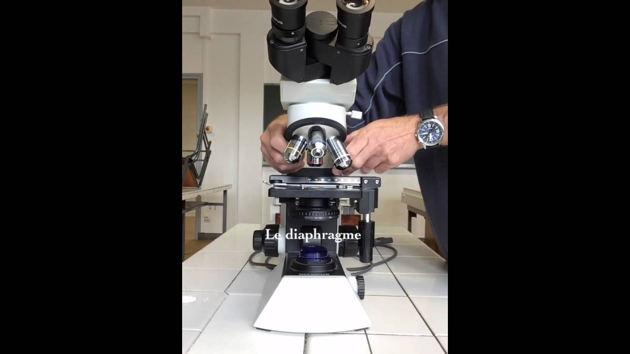 Microscope olympus cx youtube