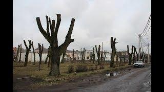 Зачем они так обрезали деревья?! Литва. Парк Бельмонтас.