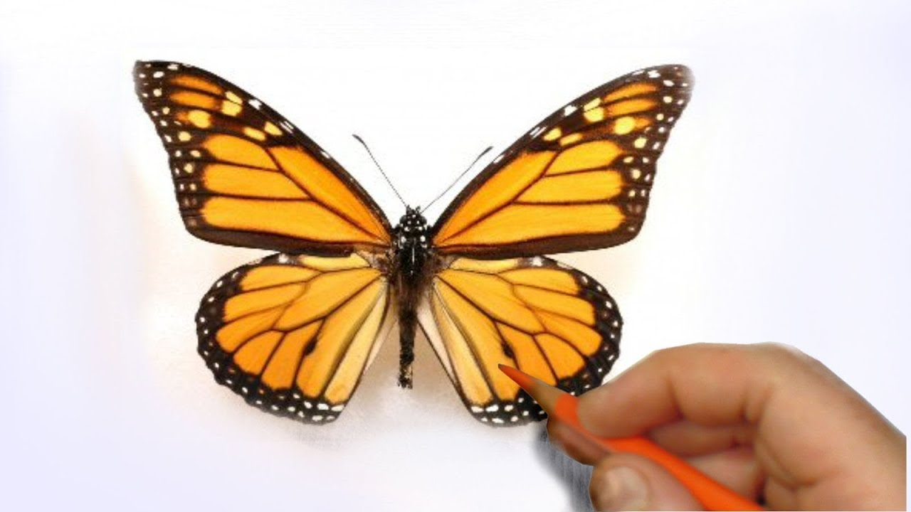 How To Illustrate A Realistic Butterfly That Will Flutter