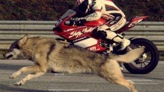 Ducati Panigale Superbike 1199 - Moto and Wolf