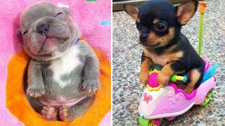Baby Dogs 🔴 Cute and Funny Dog Videos Compilation #11 | 30 Minutes of Funny Puppy Videos 2021