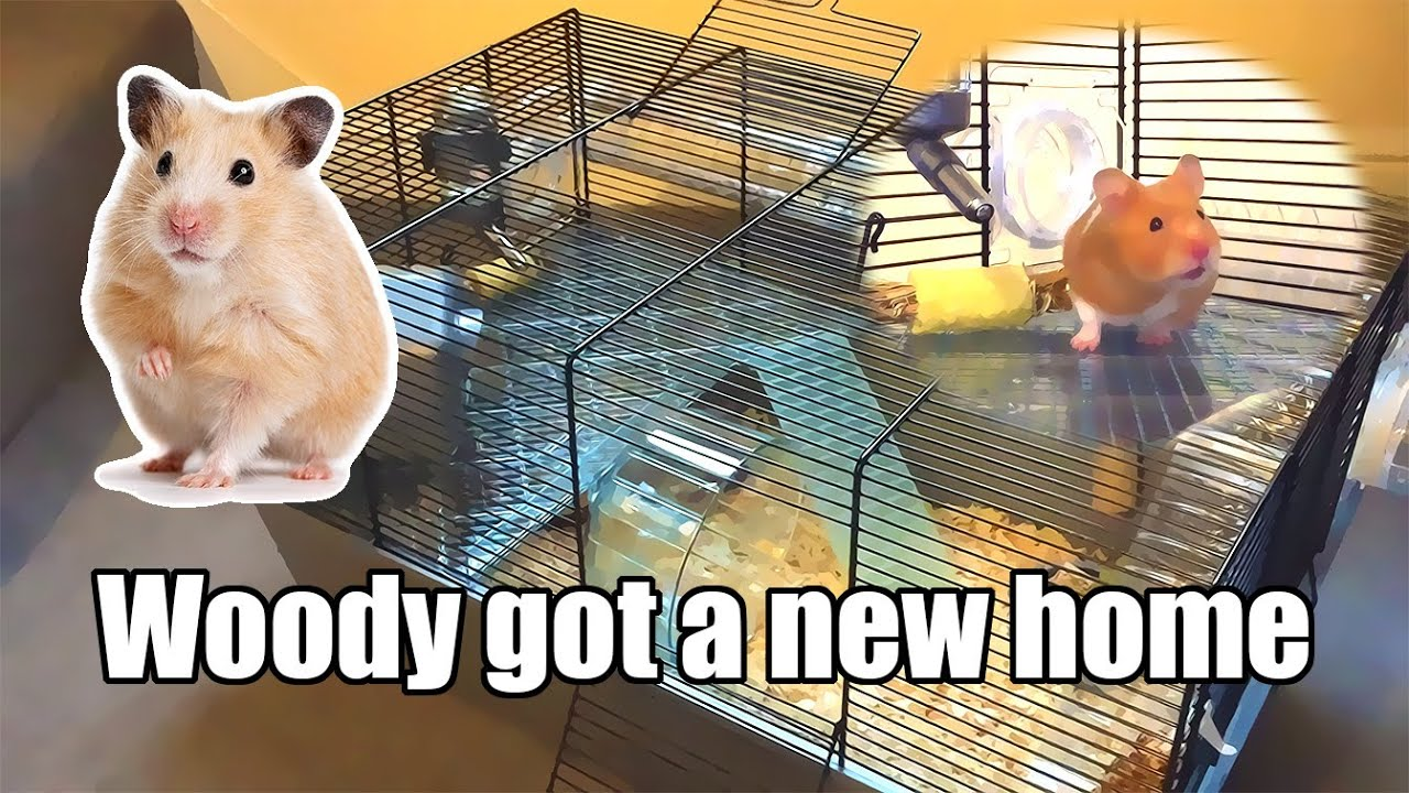 Getting A New Hamster Home For Woody New Hamster Cage Youtube
