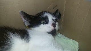 кошка из подвала со сломаным бедром