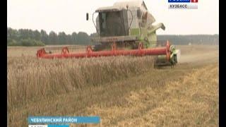 Битва за урожай в Чебулинском районе