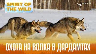 Охота на волка в Дардамтах