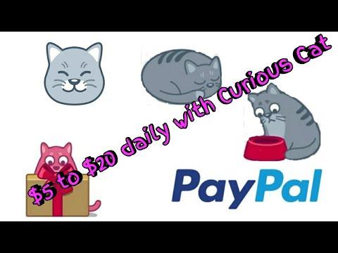 Curious Cat App Review