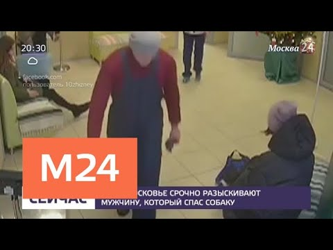 В Подмосковье разыскивают мужчину, который спас собаку - Москва 24 - Видео с Ютуба без ограничений