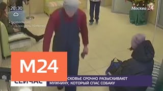 В Подмосковье разыскивают мужчину, который спас собаку - Москва 24
