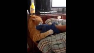 Это очень мстительный кот! улетное видео  ржач видео ролик 6sec Кино Just Video! фильм секс sex porn