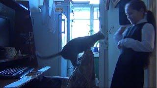 видео Сонник белая Крыса к чему снится Белая домашняя Крыса, которая может кусать видеть во сне