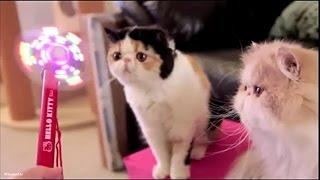 Коты инопланетяне))