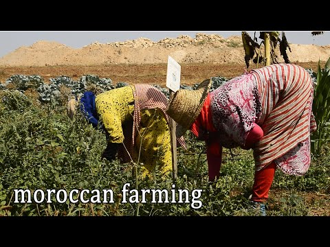 LIFE ON A MOROCCAN FARM