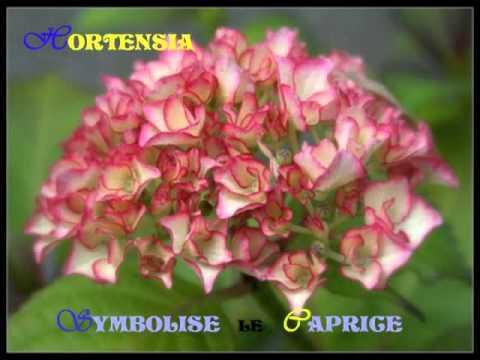 Po me fleurs d 39 amiti poem flowers doovi - Langage des fleurs amitie ...