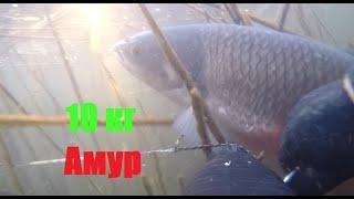 Подводная охота 2020 год Аграхан трофейный амур 10кг Spearfishing 2020