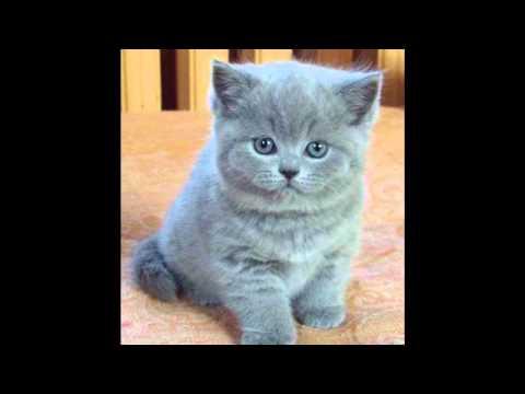 Котику сіренький котику біленький слушать