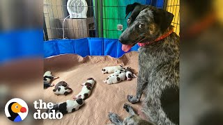 Pregnant Foster Dog Has Her Babies And Becomes A Puppy Again  | The Dodo Foster Diaries