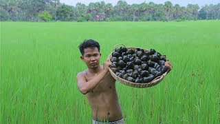 Village Food Factory - Yummy Cooking Snail Recipe (Amok Khmer) For Lunch in my Village