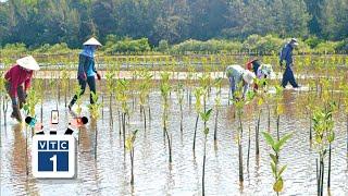 ĐBSCL: Phát động trồng rừng ngập mặn
