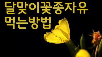 똑똑한 달맞이꽃종자유 먹는방법/운장골
