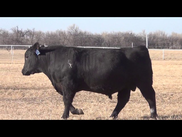 Express Ranches Lot 52
