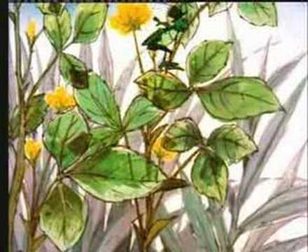 Piosenki dla dzieci Pszczółka Maja Co się stało z Pszczółką Mają