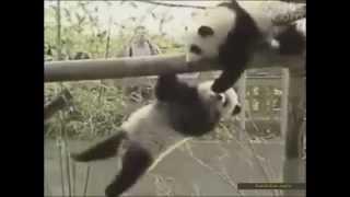 Смешные и умные животные  Смотреть видео приколы про животных