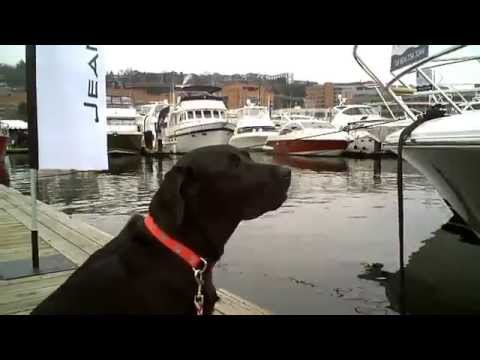 Salty Dog Boating News Presents - Dogs on a Dock!