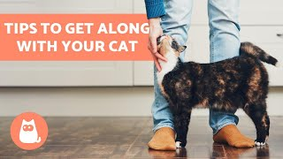 How to Get Along Better with Your Cat - 10 TIPS