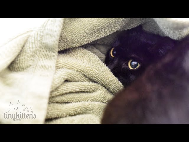 LIVE: Kitten Watch with Angela!  TinyKittens.com