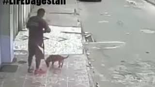 Собака писает на человека