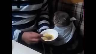 Кота кормят с ложки. A cat is fed from a spoon.