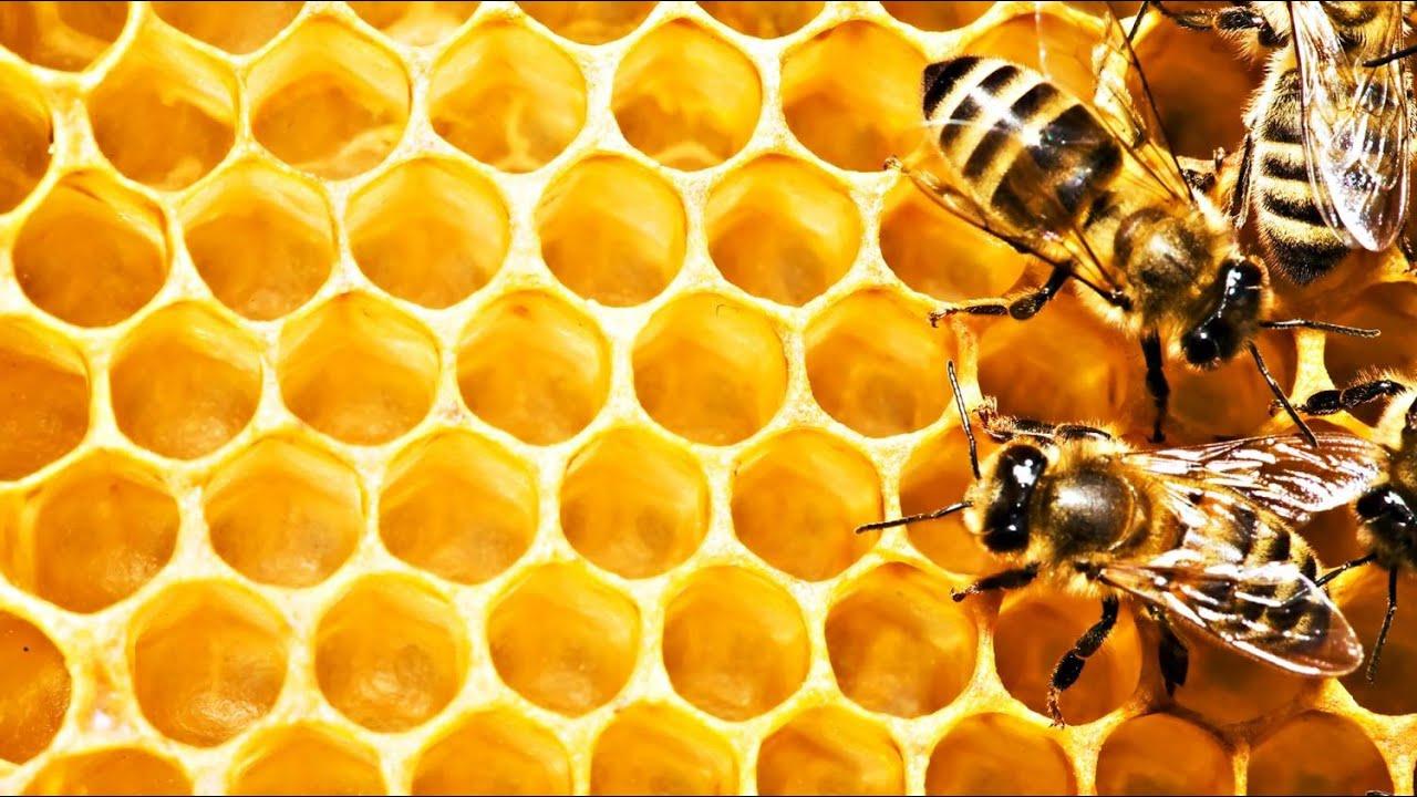 Подделка меда, как отличить порошковый поддельный Китайский мед от .