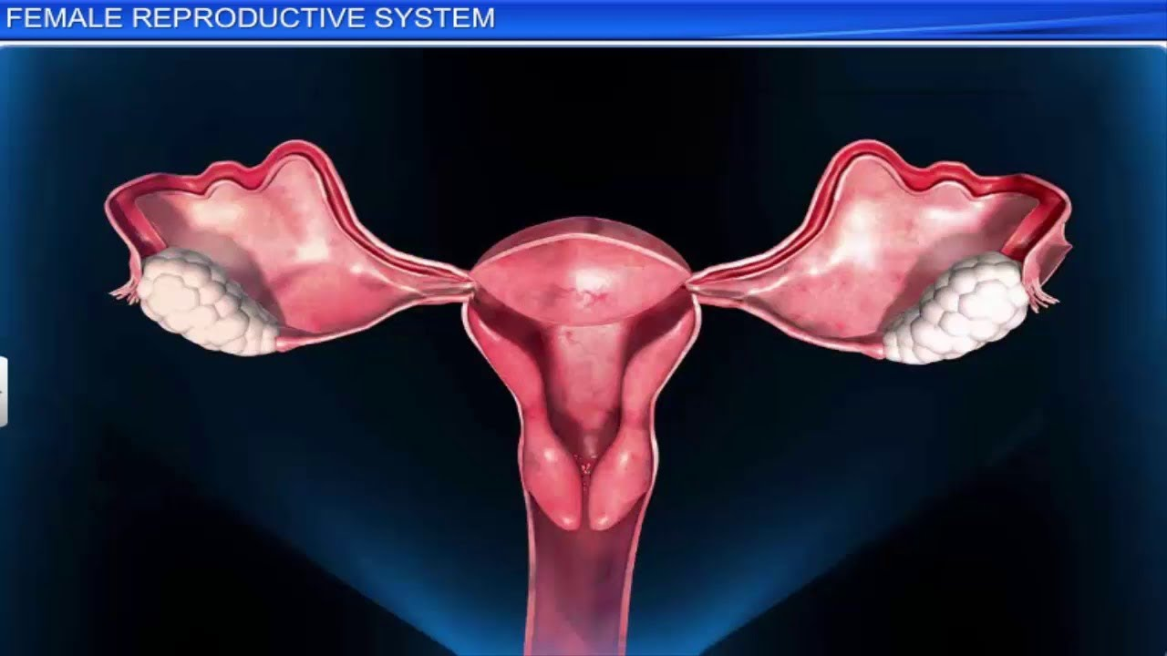 Icse Class 10 Biology The Reproductive System 2 Female