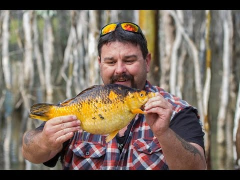breeding goldfish removed from the waterways