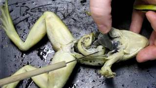 Frog Anatomy - Part 2 (Internal) Mp3