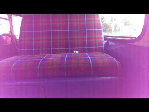 Lothian Buses Transbus Trident 699(SN04 AET) part two