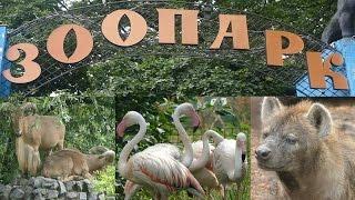 видео Под Киевом открывается новый зоопарк