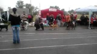 Выставка собак Оренбург 28.08.11 Кир